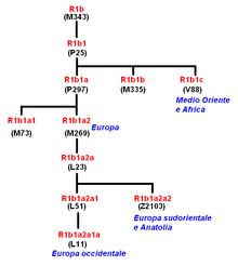 Haplogroup R1b (Y-ADN)